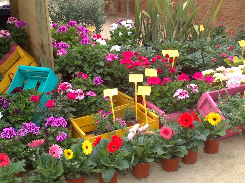 Plantas ornamentales for Plantas ornamentales de exterior